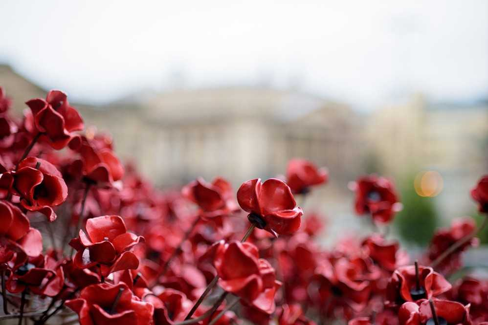 Poppies Weeping Window event in Perthshire
